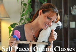 Learn at your own pace. Self-paced six week training classes. Parrot training to build communications, understand behaviors, learn to read.